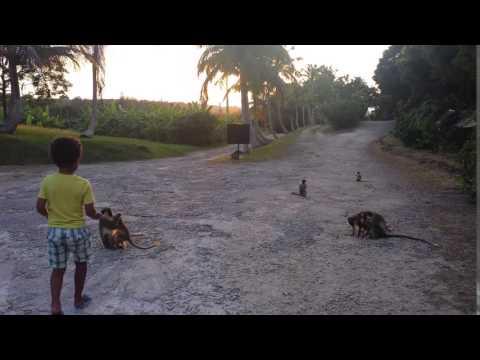 Barbados wildlife reserve Oct 2015.