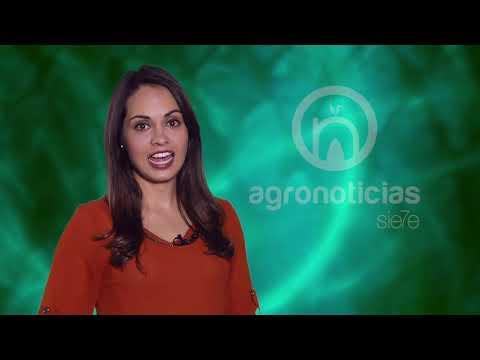 AGRONOTICIAS sie7e PROGRAMA 70