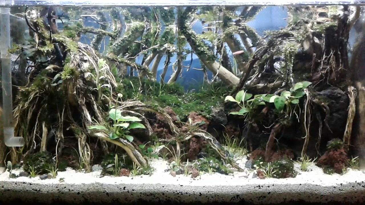 Aquascape Indonesia Youtube