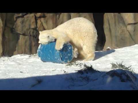 Polar Bear Party!