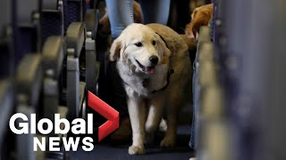 U.S. proposes restrictions on emotional-support animals