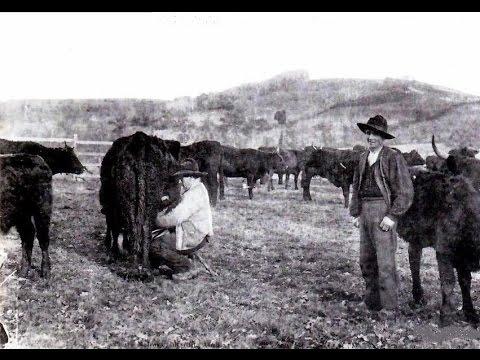 AUVERGNE - Le pâturage sur le Plateau central 1933
