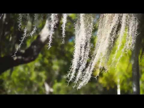 060700264 spanish moss florida H264HD1080