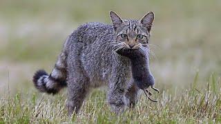 Усатые - полосатые В ДЕЛЕ 2! Котики и кошечки против ВСЕХ! смотреть онлайн в хорошем качестве - VIDEOOO