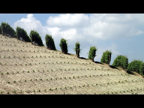 Piemonte Italy July 2012