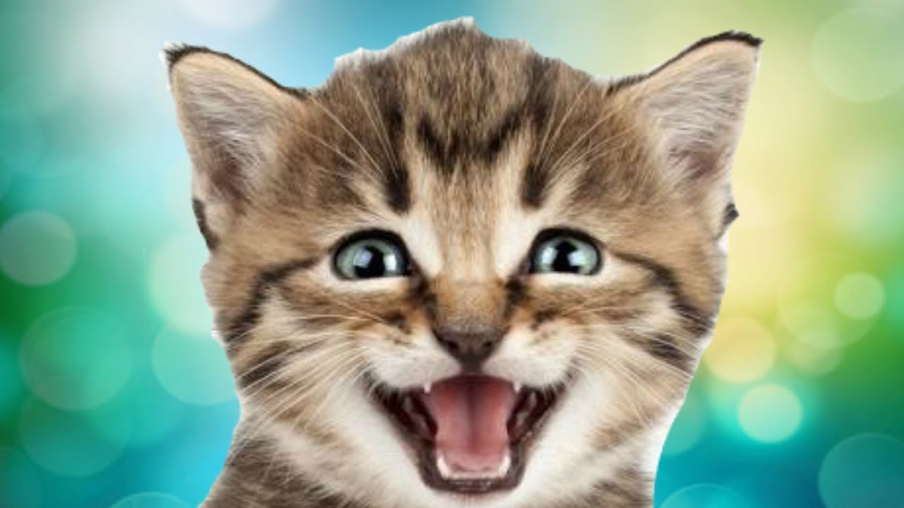 ce sa dai pisica viermilor