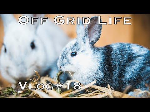 Off Grid Life | Never boring at our place