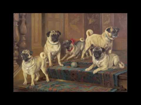 historical changes in pugs over time