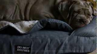 Dog Orthopaedic Bed - Orthobed