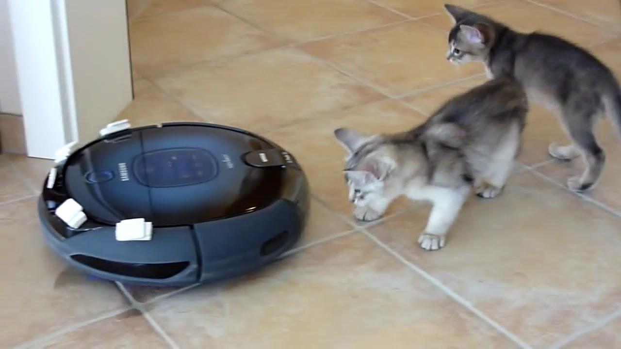 robot aspirador roomba y gatos