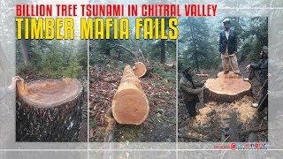 Timber Mafia Fails Billion Tree Tsunami In Chitral Valley