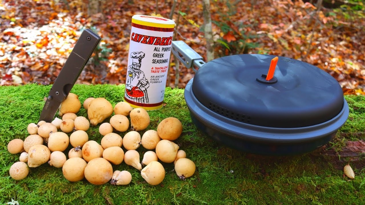 Hunting & Cooking PUFFBALL MUSHROOMS in the Forest!