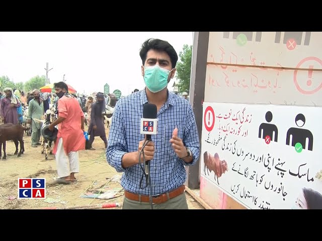 Arrangements and security measures in the Cattle Market||PSCA TV