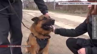 22.03.2017 В Севастополе служебная собака помогла поймать злоумышленника