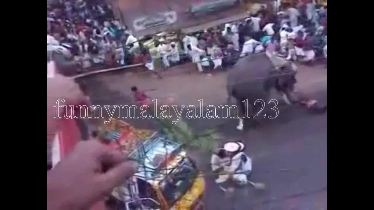 Elephant attack at sree krishna swamy temple mavelikara ...  Kerala Elephant Attack Youtube