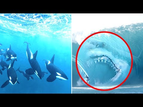 Megalodon Vs Orca Who Would Win? - YouTube