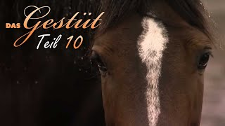 Das Gestüt - Teil 10 - Reiterwechsel Doku über Pferde, Schulfilm, Lehrfilm, deutsch, Dokumentation