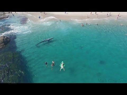 Whale Visits Beachgoers In Laguna Beach 8/8/17