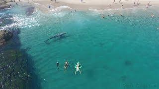 Whale visits beachgoers in Laguna Beach 8/8/17 thumbnail