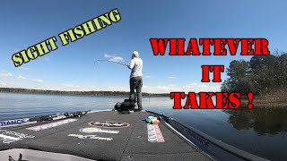 Sight Fishing - WHATEVER IT TAKES