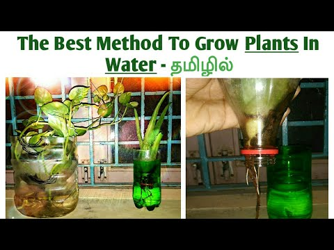 How To Grow Plants In Water | Easy Method | தமிழில் | Tamil Life