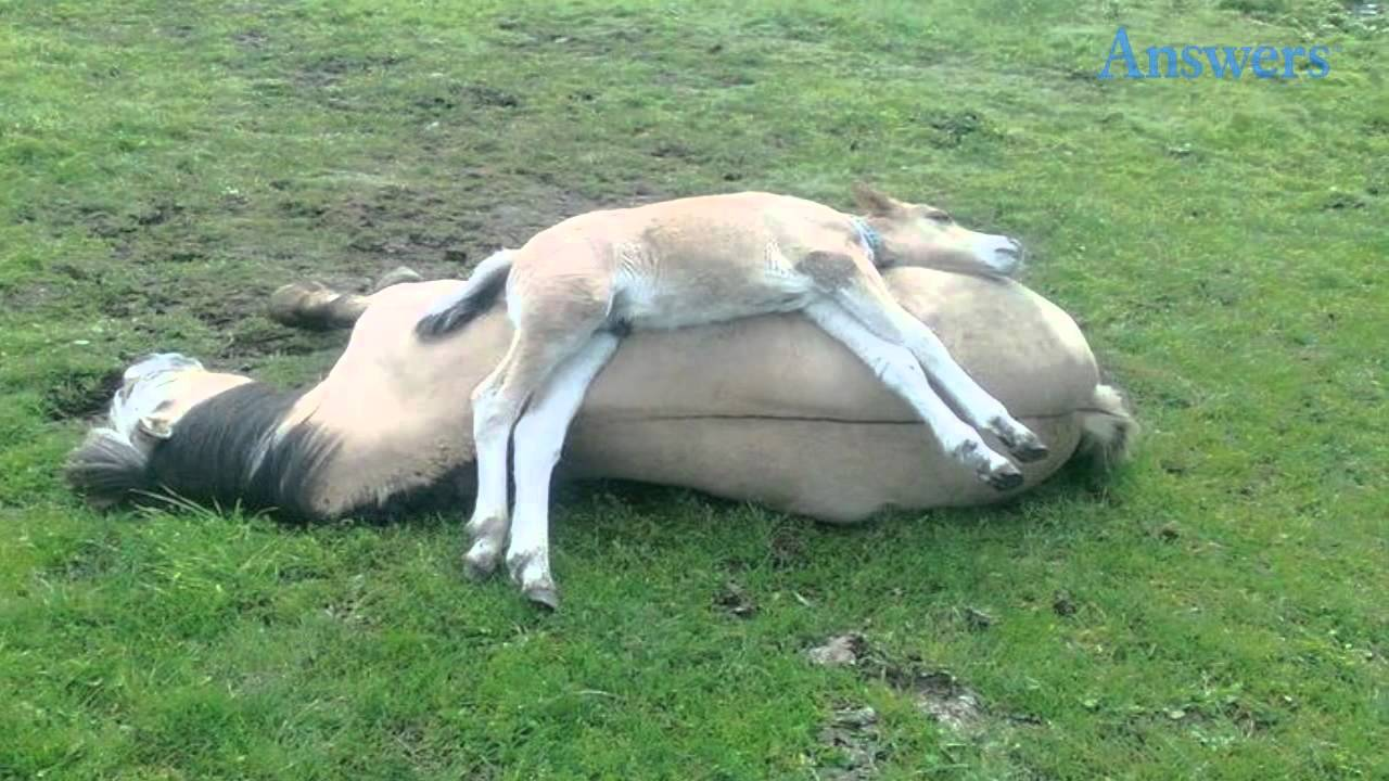 this adorable little foal didn t feel like sleeping on the ground