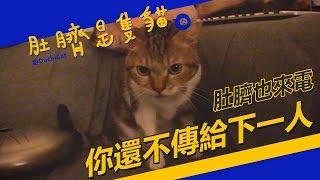 ◖肚臍是隻貓◗ 鈴鈴鈴!肚臍專線接通中♬