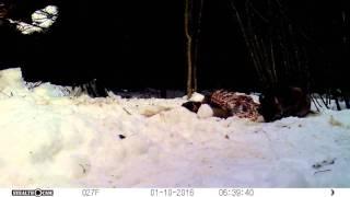 Trail Cam: Kitty On The Body Farm!