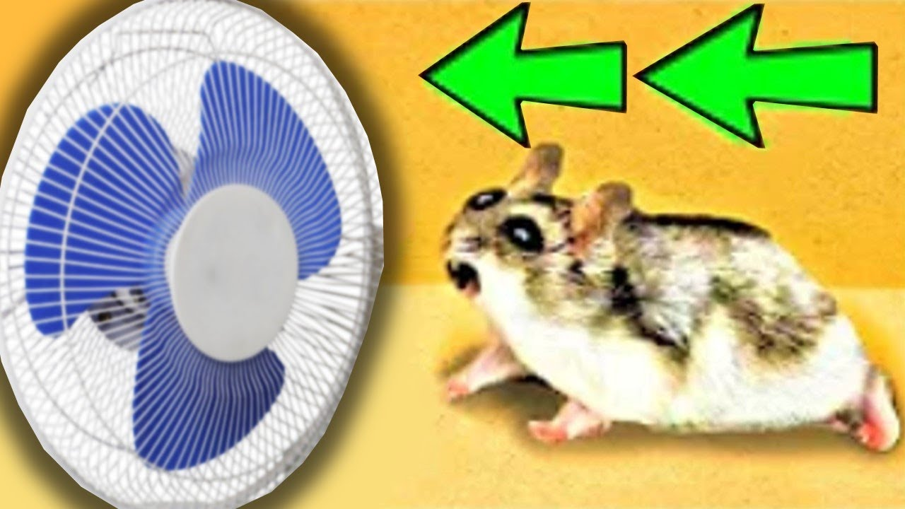 🐹Fan Hamster Maze with Traps 😱[OBSTACLE COURSE]😱