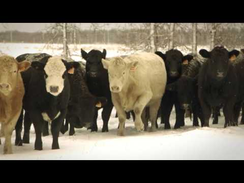 Beef North - Animal Health and Care