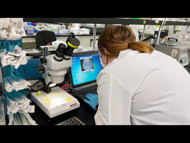ClearLight for ImmunoOncology Research