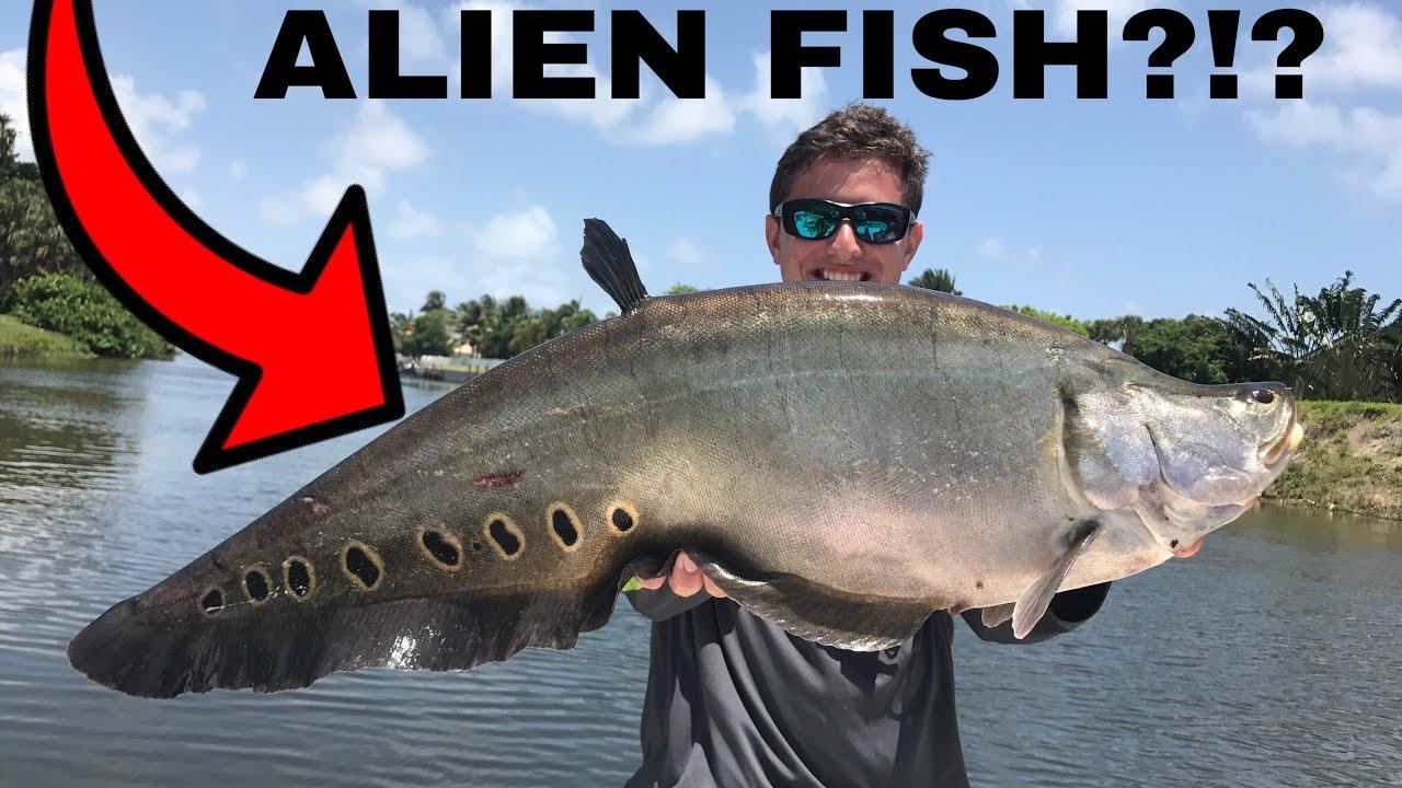 Insane freshwater fishing on lake ida ft south florida for South florida freshwater fish