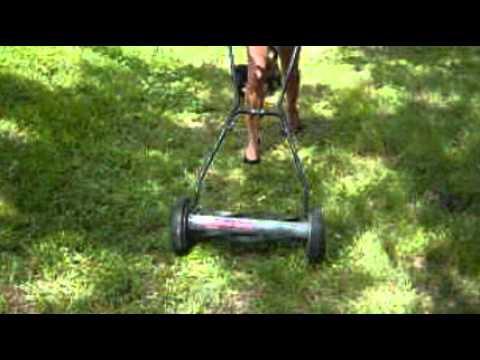 reel lawn mower girl sexy green woman youtube