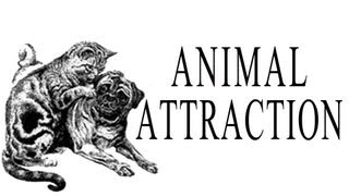 Play Animal Attraction