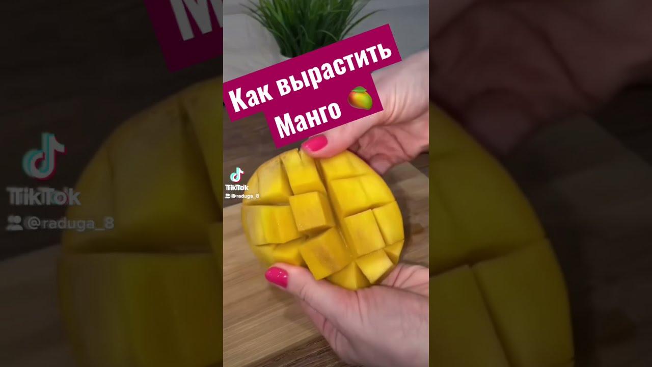 Как вырастить манго 🥭 у себя дома! Видео с результатом 