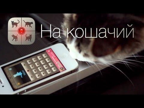 - реклама на лучших украинских сайтах