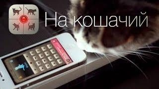 Обзор приложения На кошачий для iPhone