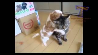 Малыши. Щенки и котята