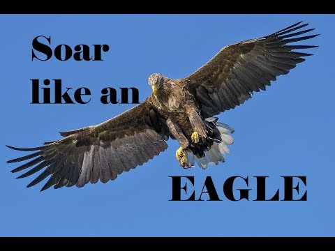 Awe-inspiring video of the day - They will soar