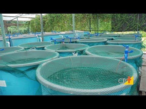 Clique e veja o vídeo Curso Cultivo de Peixes em Sistemas de Recirculação de Água - RAS