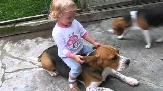 Beagle Bobo And Children