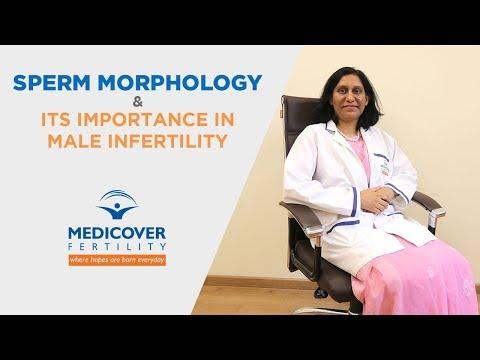 Sperm Morphology & Its Importance in Male Infertility