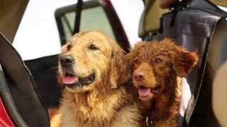 Автогамаки для перевозки собак Томас