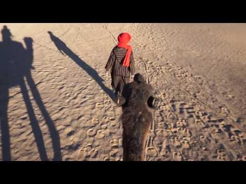 Sahara Trek 1