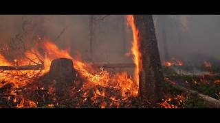 WILDFIRE MITIGATION STRATEGY - PRESCRIBED BURN - SIFCo Type 4 Treatment