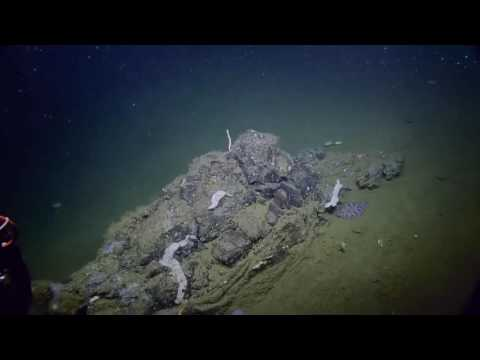 Investigating Fascinating Geological Features | Nautilus Live