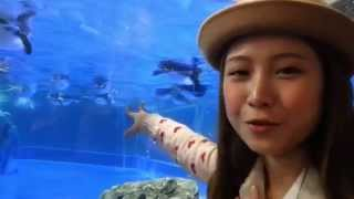 One Day To Go To The Aquarium To See The Penguins - Zheng Jia Zhen(ILI)