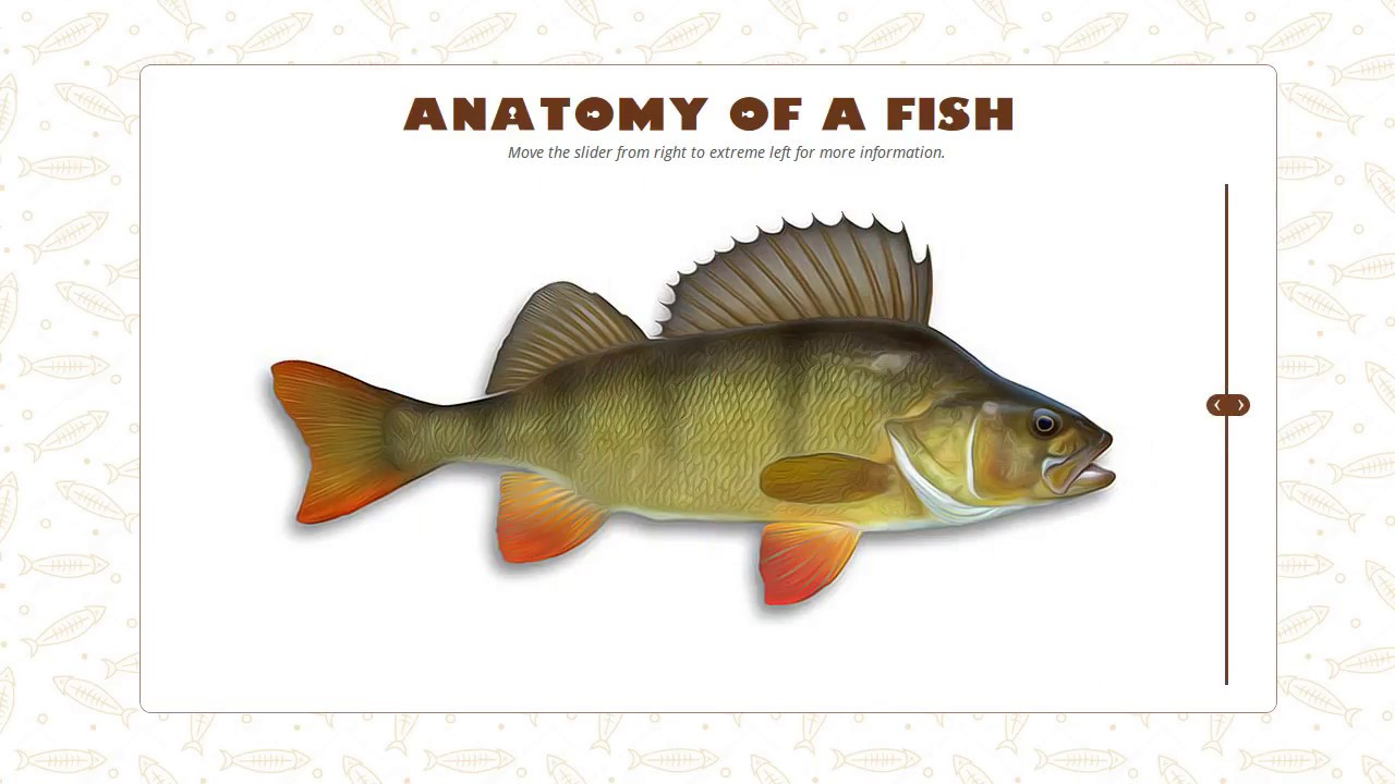 Anatomy of a Fish - Aman Vohra - YouTube