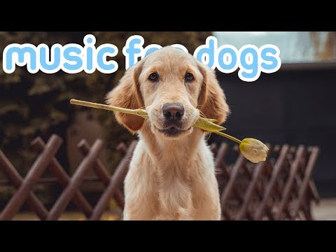 11-hours-of-relax-my-dog-music!-songs-to-chill-your-dog!-new-2019!