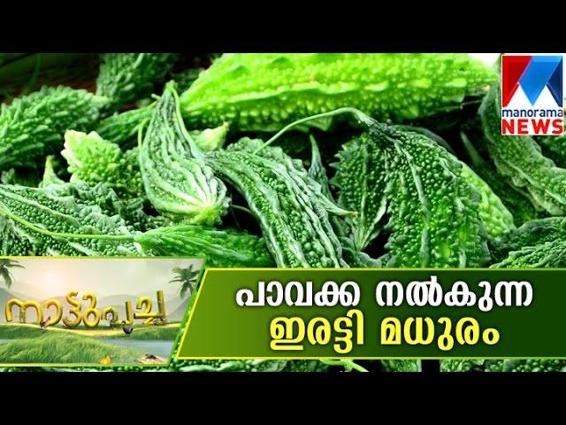 Palakkadan methods in Bitter Gourd | Manorama News | Nattupacha